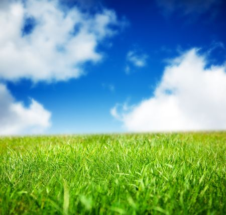 spring green field of grass Stock Photo - 5600848