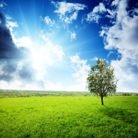 field of grass and sunset Stock Photo - 5600944