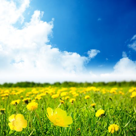 flowers and sunny day Stock Photo - 5691577
