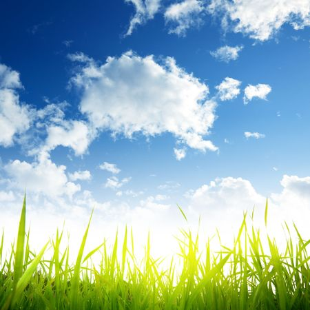 field of spring grass and sun Stock Photo - 5691518