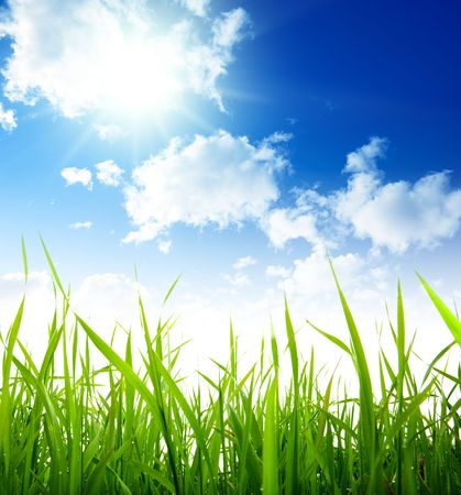 field of spring grass Stock Photo - 5691513