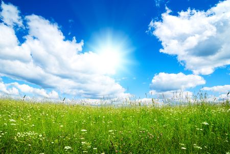 field of summer flowers and perfect sky Stock Photo - 5691521