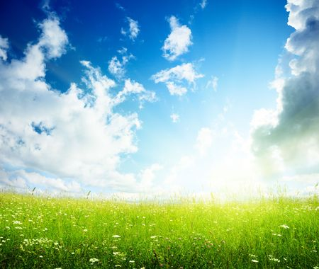 field of summer flowers and perfect sky Stock Photo - 5691568