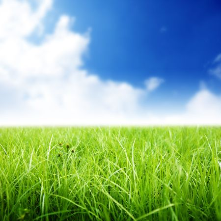 green grass under perfect blue sky Stock Photo - 5711025