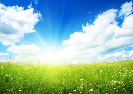 field of summer flowers and perfect sky Stock Photo - 5711009