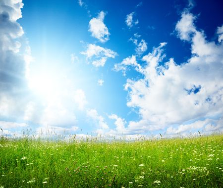 field of summer flowers and perfect sky Stock Photo - 5711018