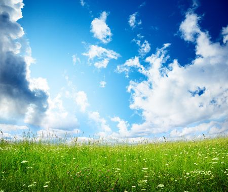 field of summer flowers and perfect sky Stock Photo - 5771300