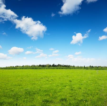 voorjaar gebied en sky