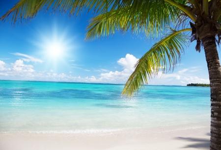 playas tropicales: Océano y palmas de coco