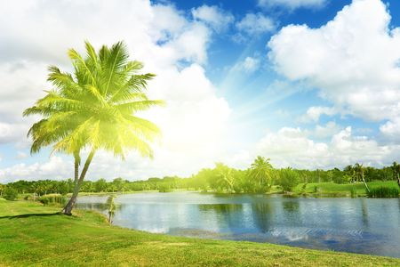 palms and tropical lake photo