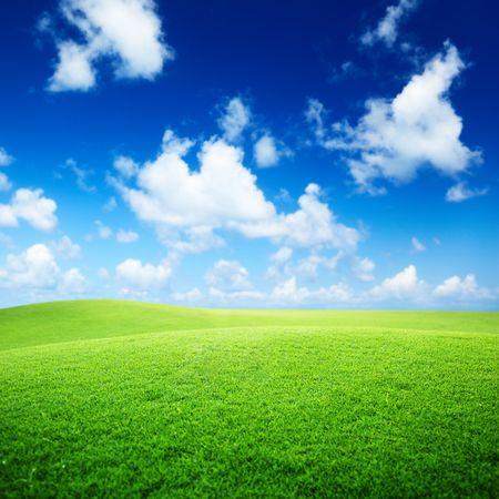 잔디와 완벽한 푸른 하늘의 들판