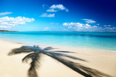 shadow of coconut palm and Caribbean sea photo