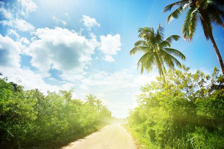 ground road in jungle. Dominican republic photo