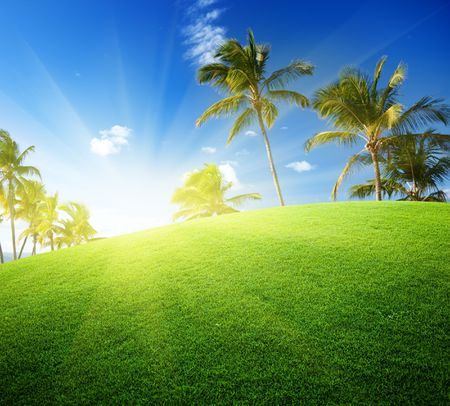 coconut palms on the green field and sun photo