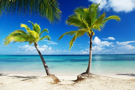 Caribbean sea and coconut pulms Stock Photo - 6105998