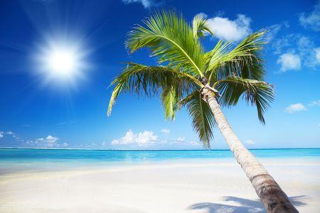 playas tropicales: Océano y Palma Foto de archivo