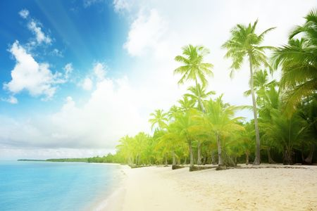 caribbean sea and palms photo