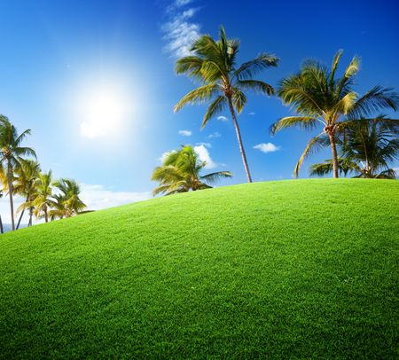 coconut palms on the green field photo