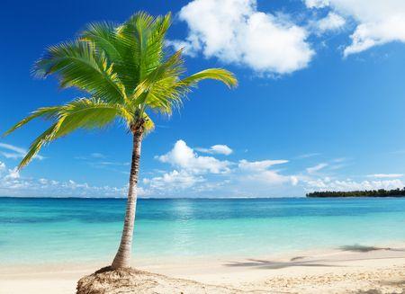 tropical plants: Caribbean sea and coconut pulm