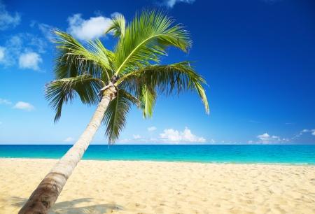 Meer und Kokosnuss-pulm