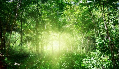 sunlight in jungle of Dominican photo