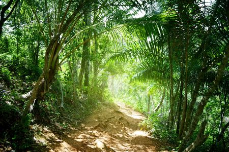 ground road in jungle of Dominican Stock Photo - 6330790