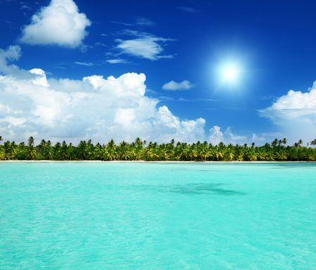 palms and caribbean sea photo