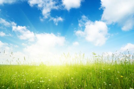 field of flowers and sunlight Stock Photo - 6330679