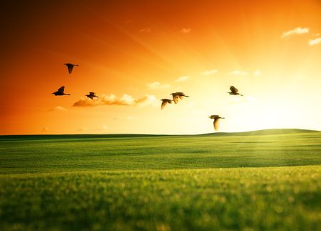 sunset sunrise: field of grass and flying birds Stock Photo
