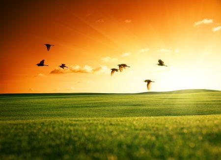 wschód słońca: pole z trawy i latania ptaków