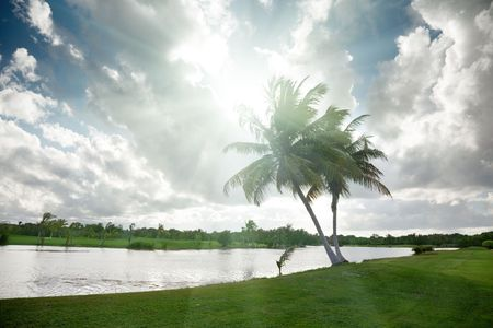 palms and tropical lake photo
