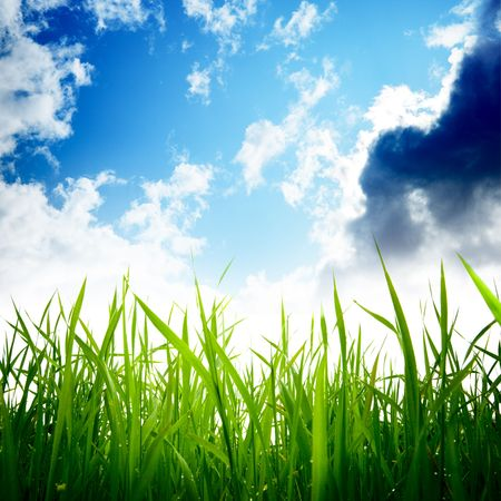 grass and cloudy sky Stock Photo - 6436363