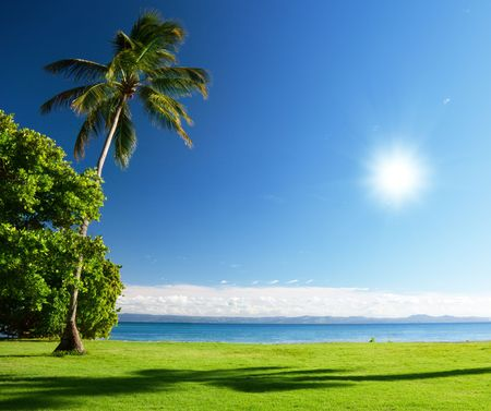 Mar Caribe y palmas Foto de archivo