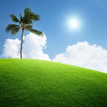 coconut palm on the green field Stock Photo - 6482338