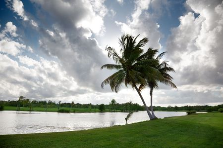 palms and tropical lake Stock Photo - 6482354
