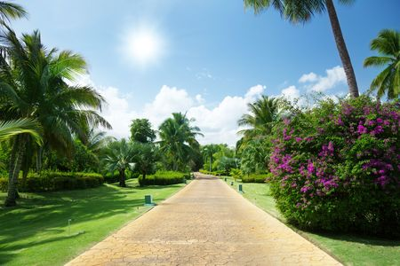 woodland path: road in tropical garden Stock Photo