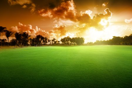 trees on the field of grass and sunset photo