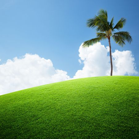 coconut palm on the green field photo