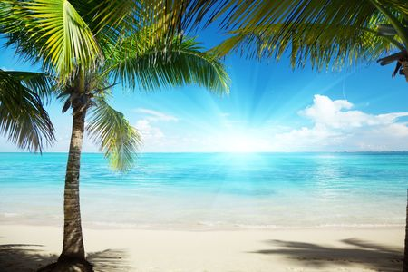Caribbean sea and coconut pulms photo