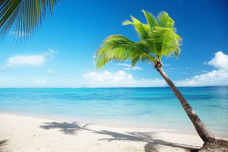 dominican: Caribbean sea and coconut palm