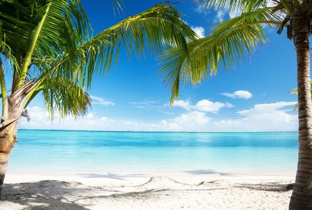 Caribbean sea and coconut palms Stock Photo - 6545193