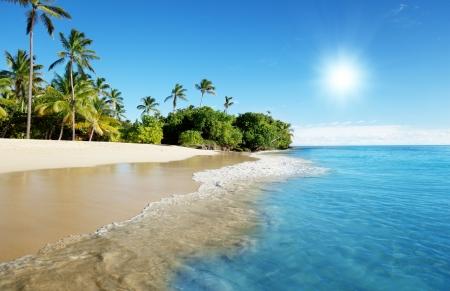 Caraïbische zee en palmen  Stockfoto