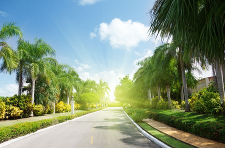 roadways: road in tropical garden Stock Photo