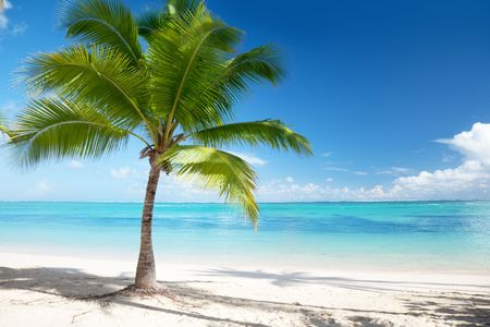Caribbean sea and coconut palm Stock Photo - 6596902