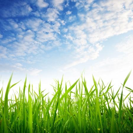 잔디와 흐린 하늘