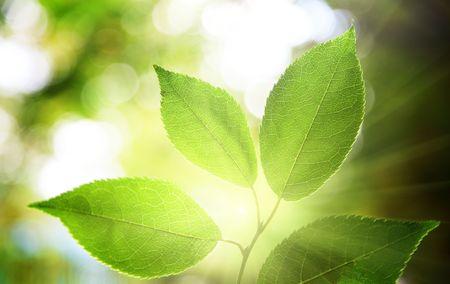 Blätter in tiefen Gesamtstruktur Standard-Bild - 6648044