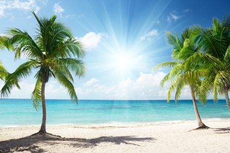 Caribbean sea and coconut palms Stock Photo - 6689190