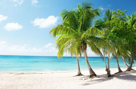 Caribbean sea and coconut palms Stock Photo - 6689183