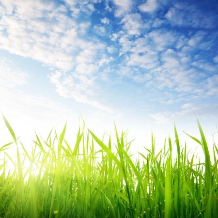 gras en bewolkte hemel Stockfoto