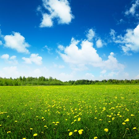 field of spring flowers and perfect sky photo
